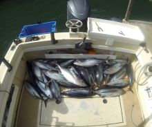 BC Albacore Tuna Fishing Boat Full of Tuna