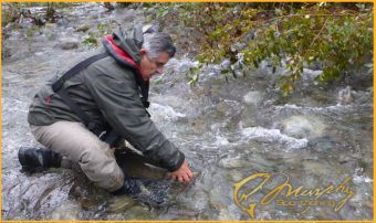 Releasing Chinook Salmon
