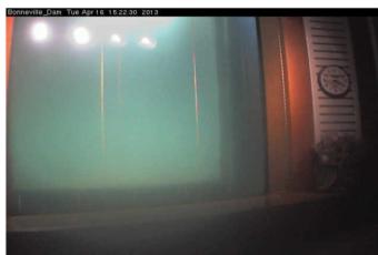 Bc fishing few short weeks until ocean fishing in for Bonneville dam fish camera
