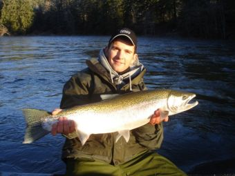 Chromer Steelhead in the Lower Stamp River
