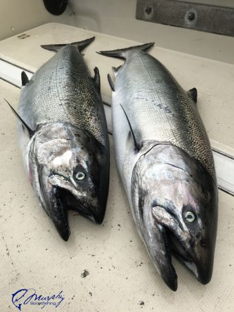 Ucluelet Fishing Report May 2 2017