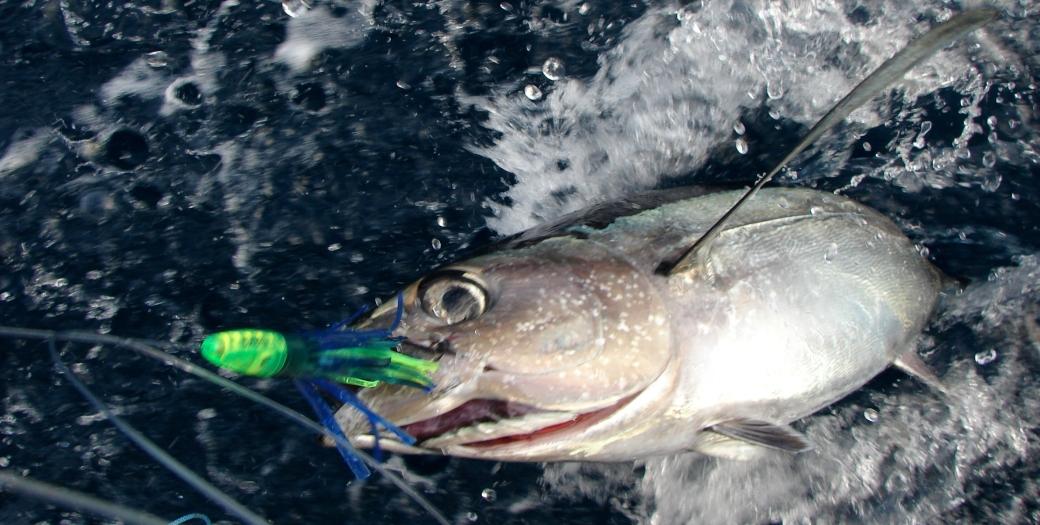 Tuna fishing videos free for Tuna fishing california